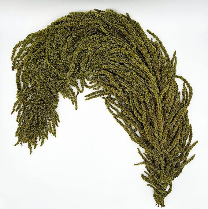 plante stabilizate 1 verde 6