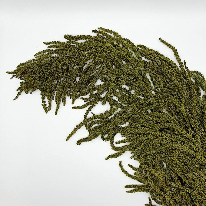 plante stabilizate 1 verde 6 1
