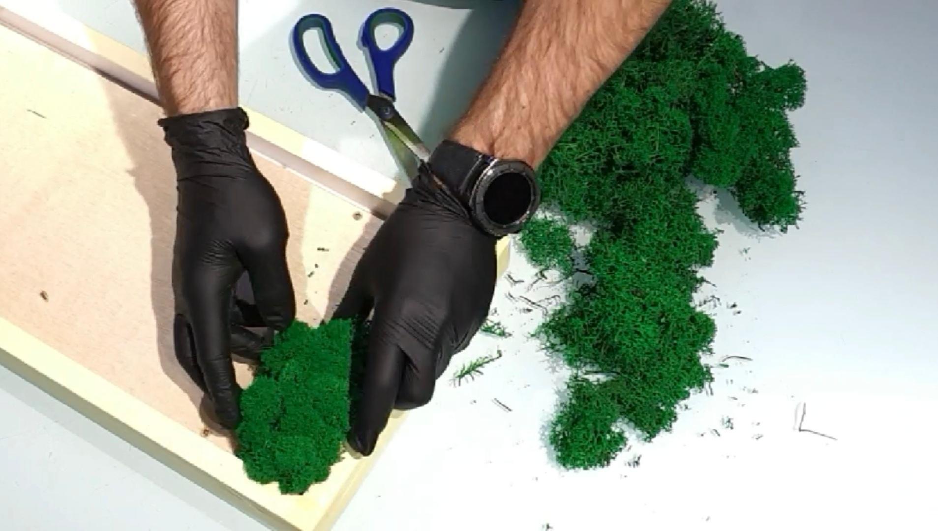Cum se lipesc lichenii